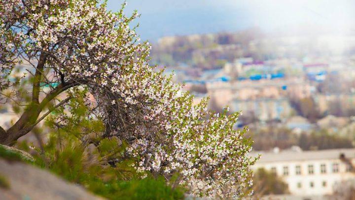 Цветущая Сулайман-гора