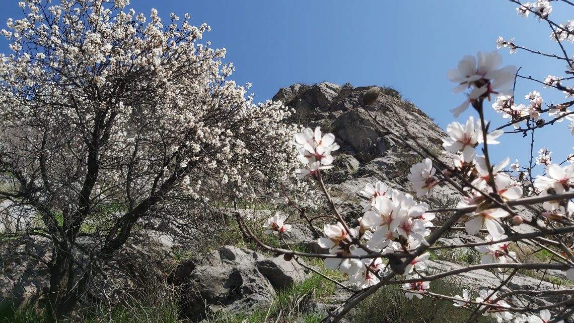 #Osh. Сулейман гора вся в цвету!