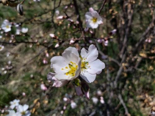 Osh. Spring on Suleiman Mountain. Photo of Sahira Nazarova